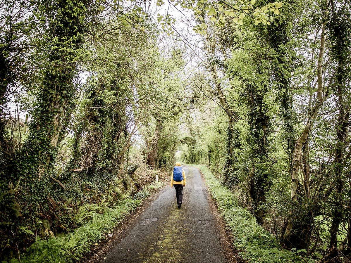 Irland Wald