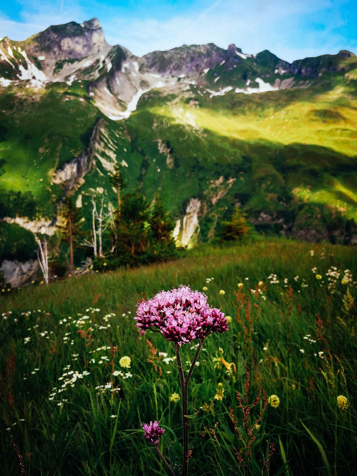Landschaft Hüttenwanderung Allgäu