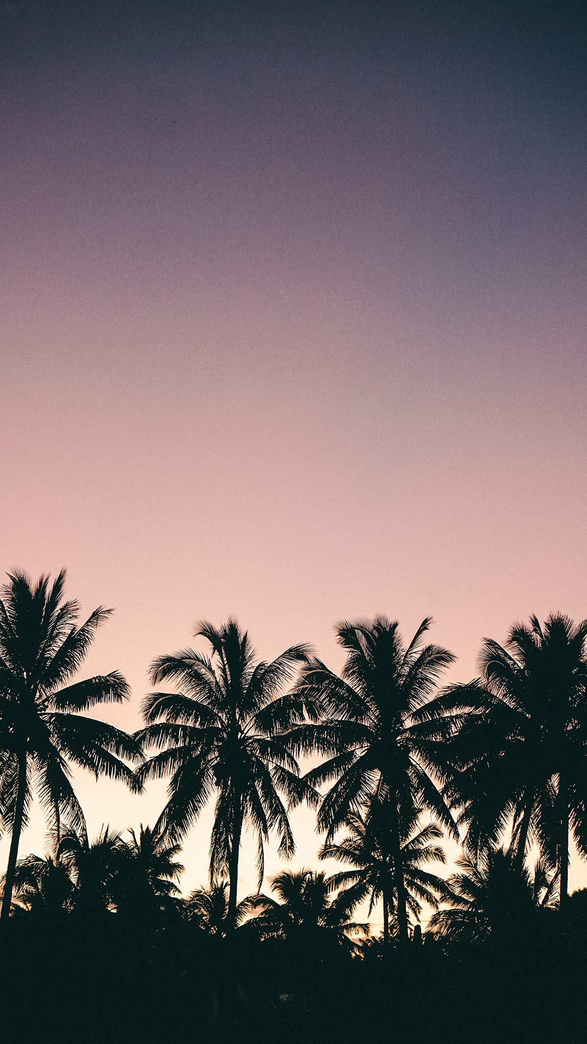 Rarotonga Impressionen Palmen im Sonnenuntergang