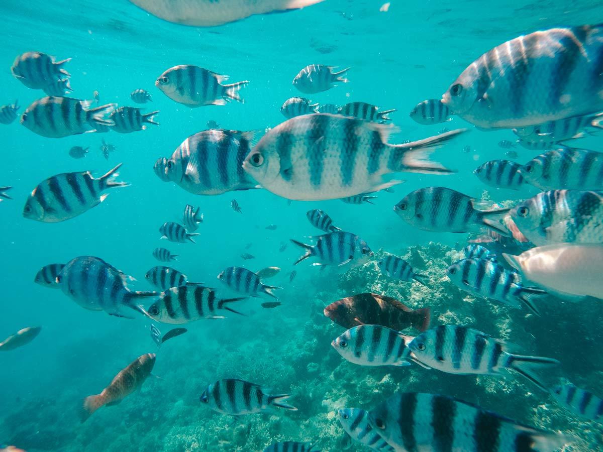 Fidschis tolle Unterwasserwelt