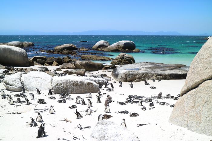Kapstadt Urlaub 2019