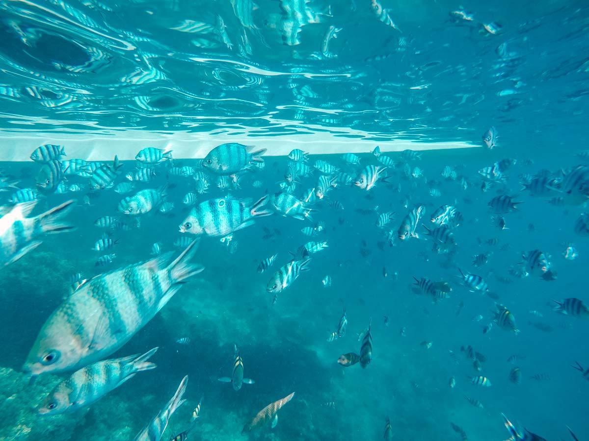 Tauchen gehen auf Fidschi
