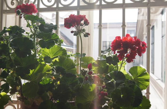 Blumen in Wien