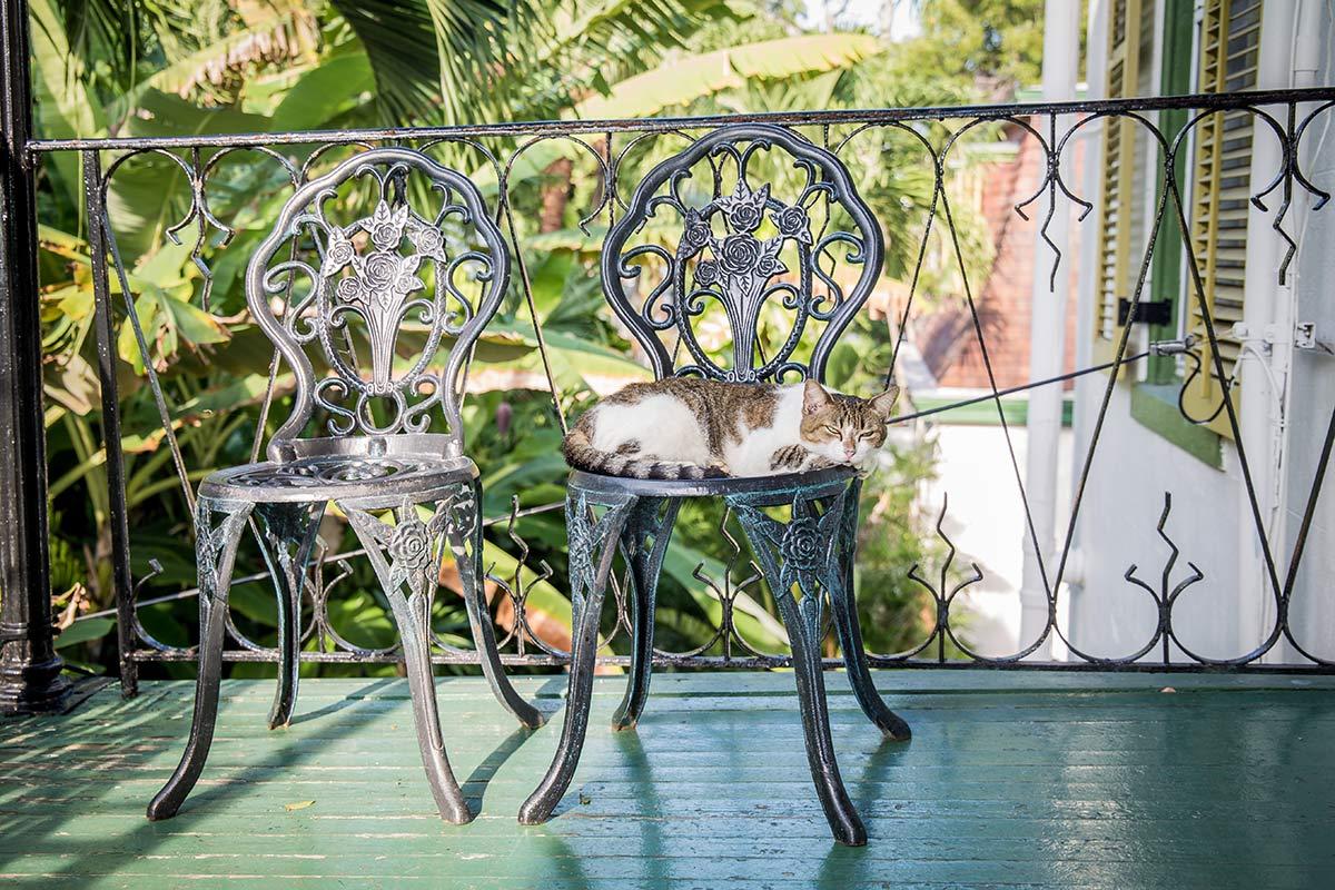 Hemingway Katze auf Veranda