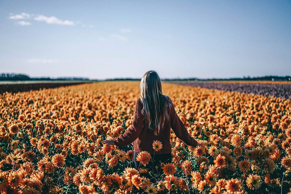 Texel Blumenwiese