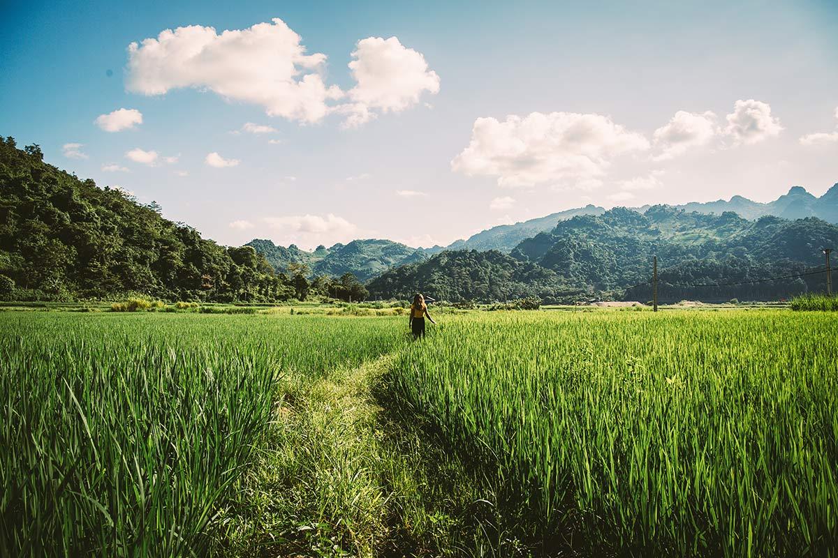 Reisfelder im Mai Chau Tal Nordvietnam