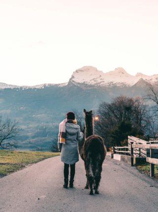 Spaziergang mit Lama in Triesenberg