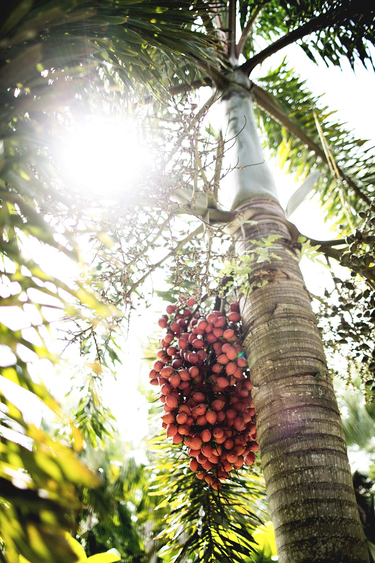 Baum Habitation Clement Martinique