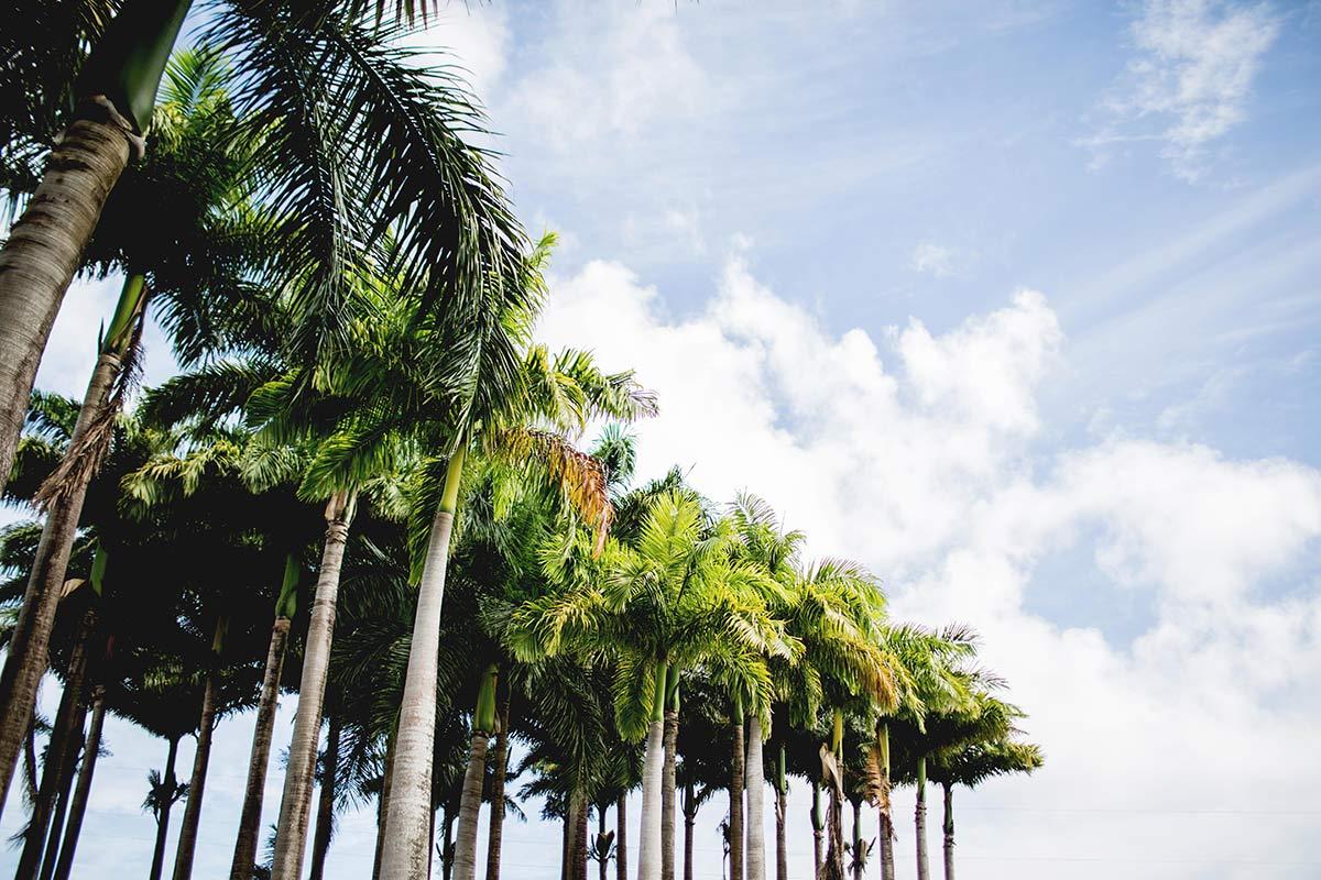 Botanischer Garten Martinique