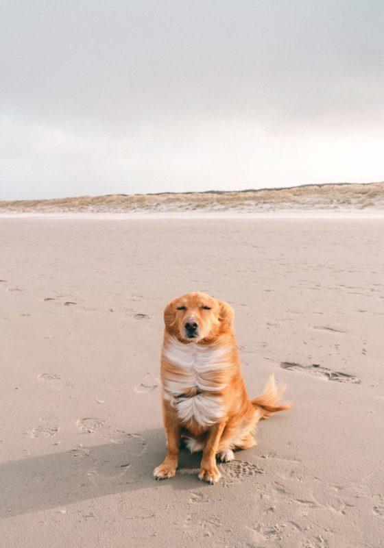 Hunde auf Juist