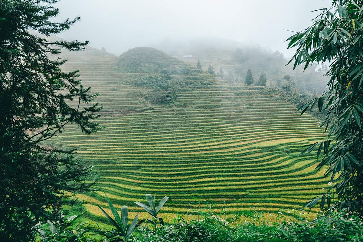 Reisterasse Sapa Vietnam