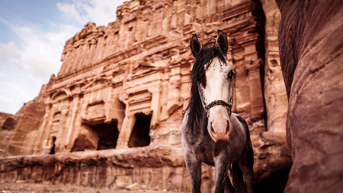 Petra Fassade Pferd