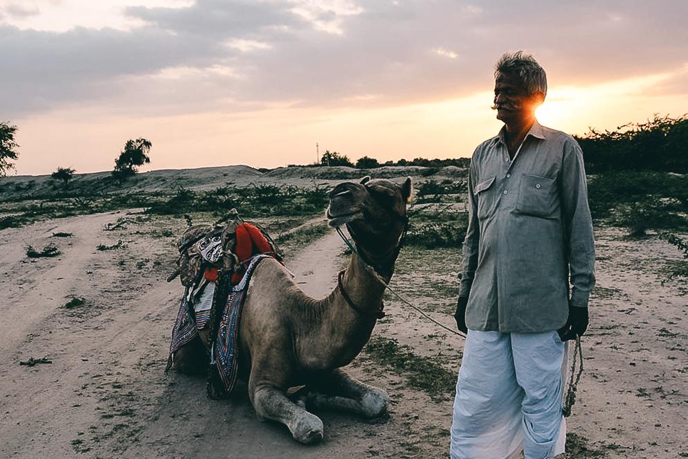 reisebericht indien kamel jodhpurs