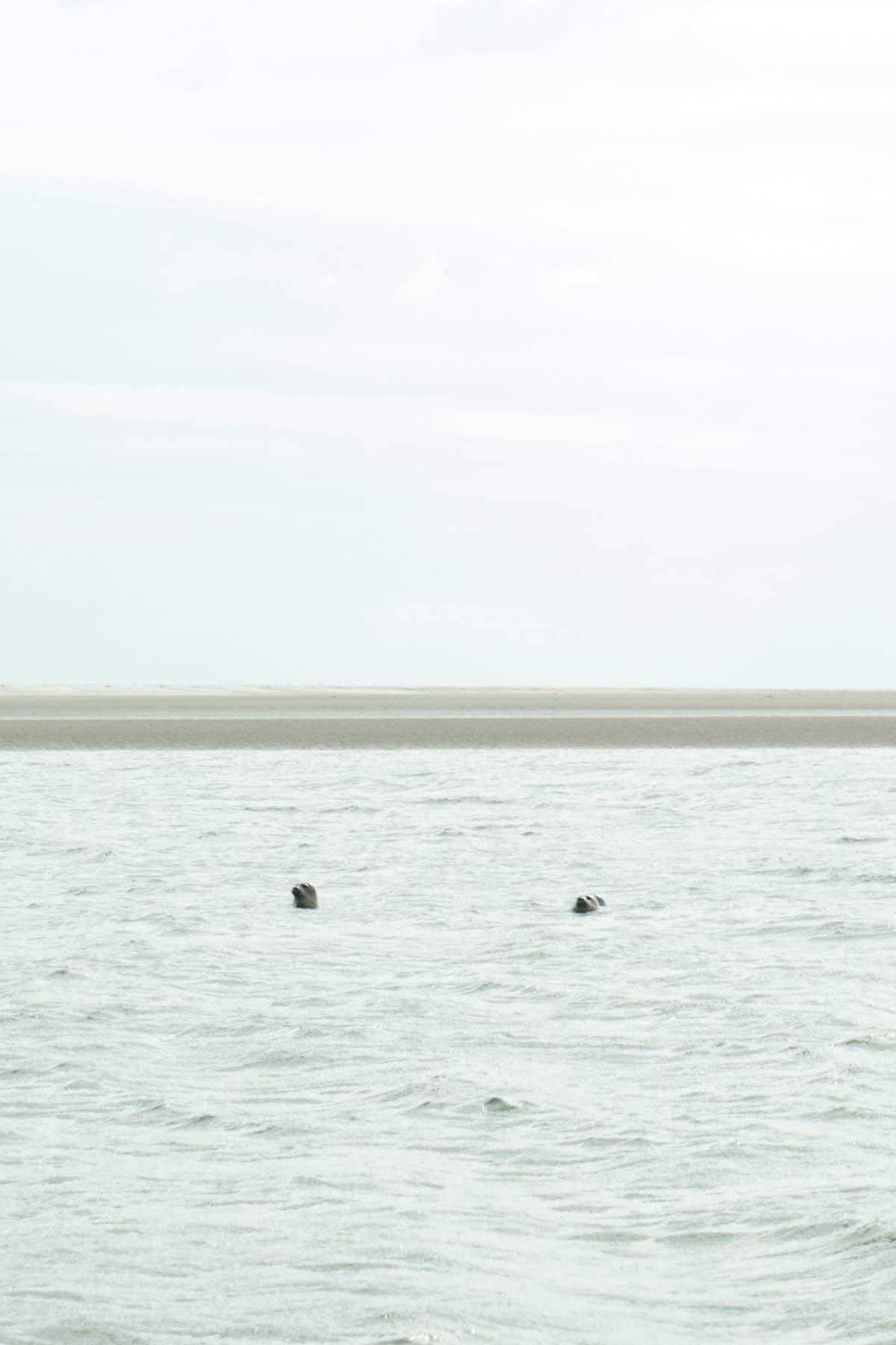 Seehunde Fanoe