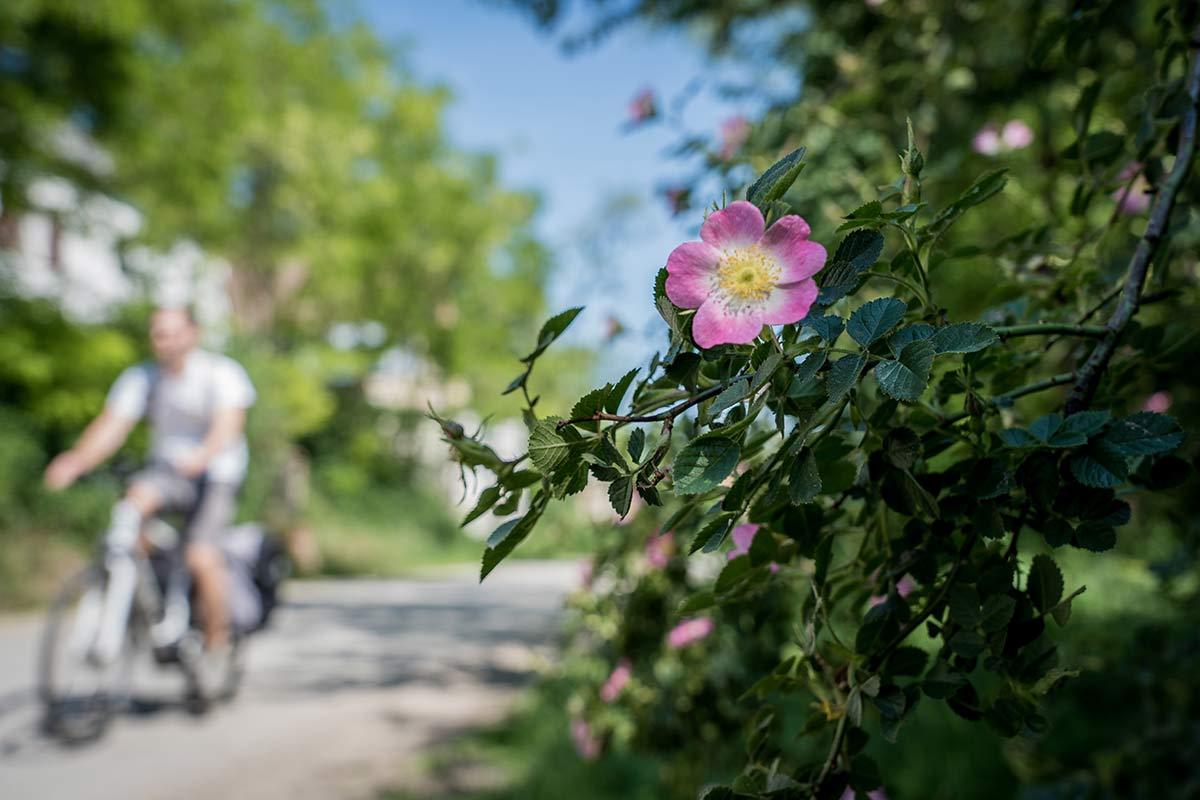 Radeln auf dem Iron Curtain Trail