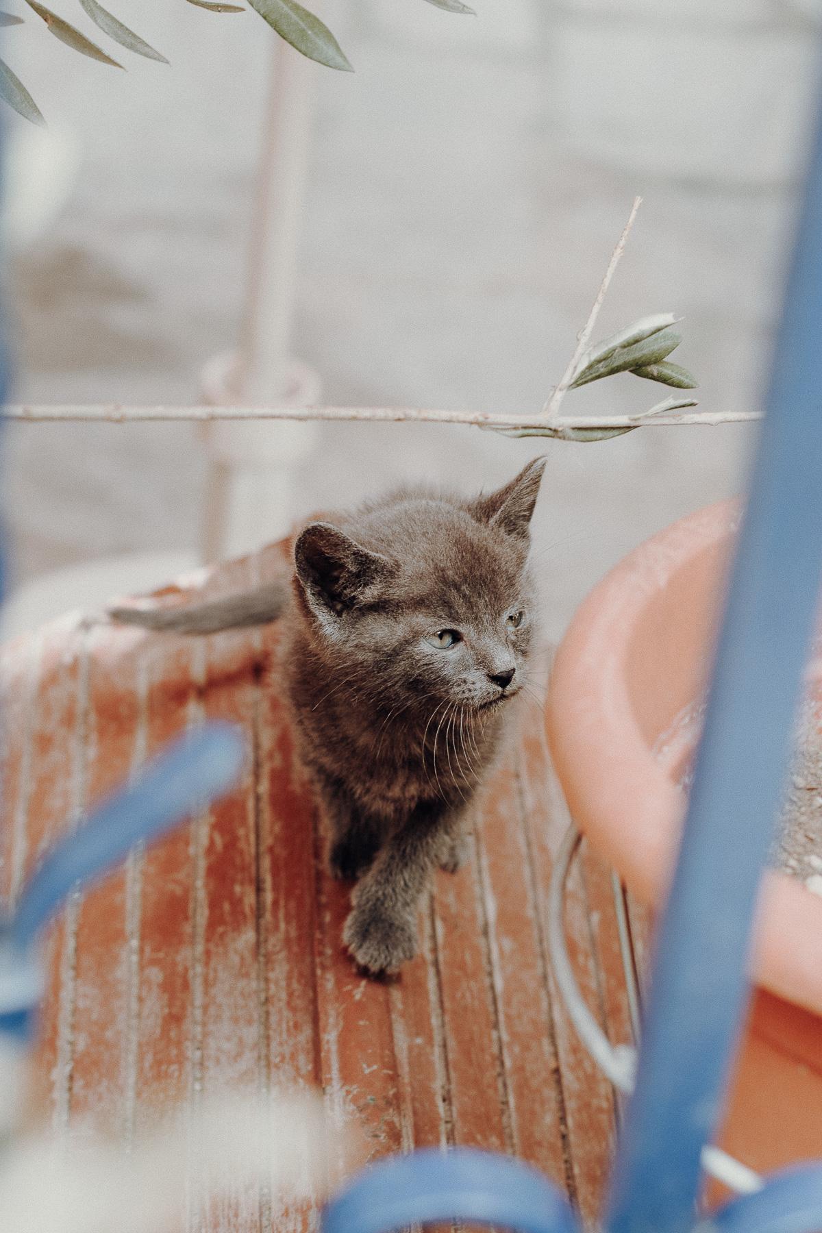 Griechenland Katze