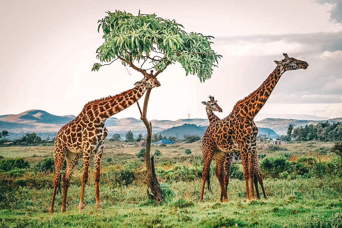 Arusha Nationalpark Tansania