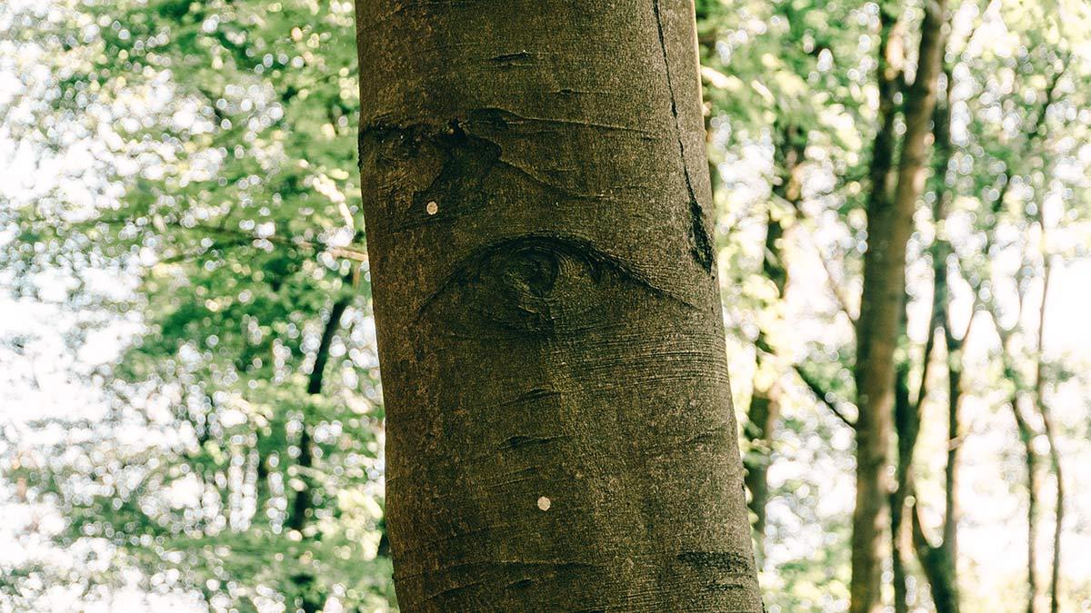 Waldbaden Baum Auge