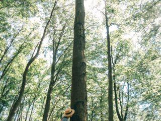 Waldbaden Baum riechen
