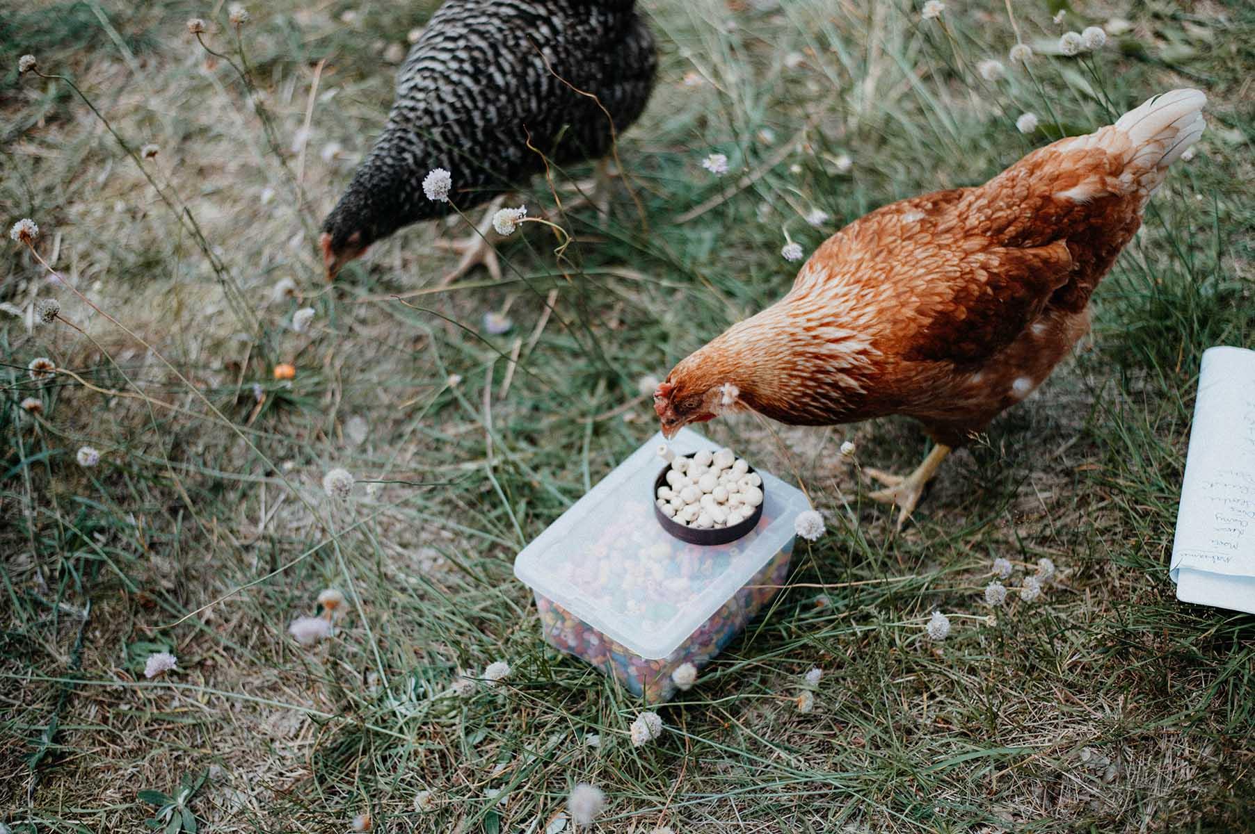 Alte Schule Hühner Makramee