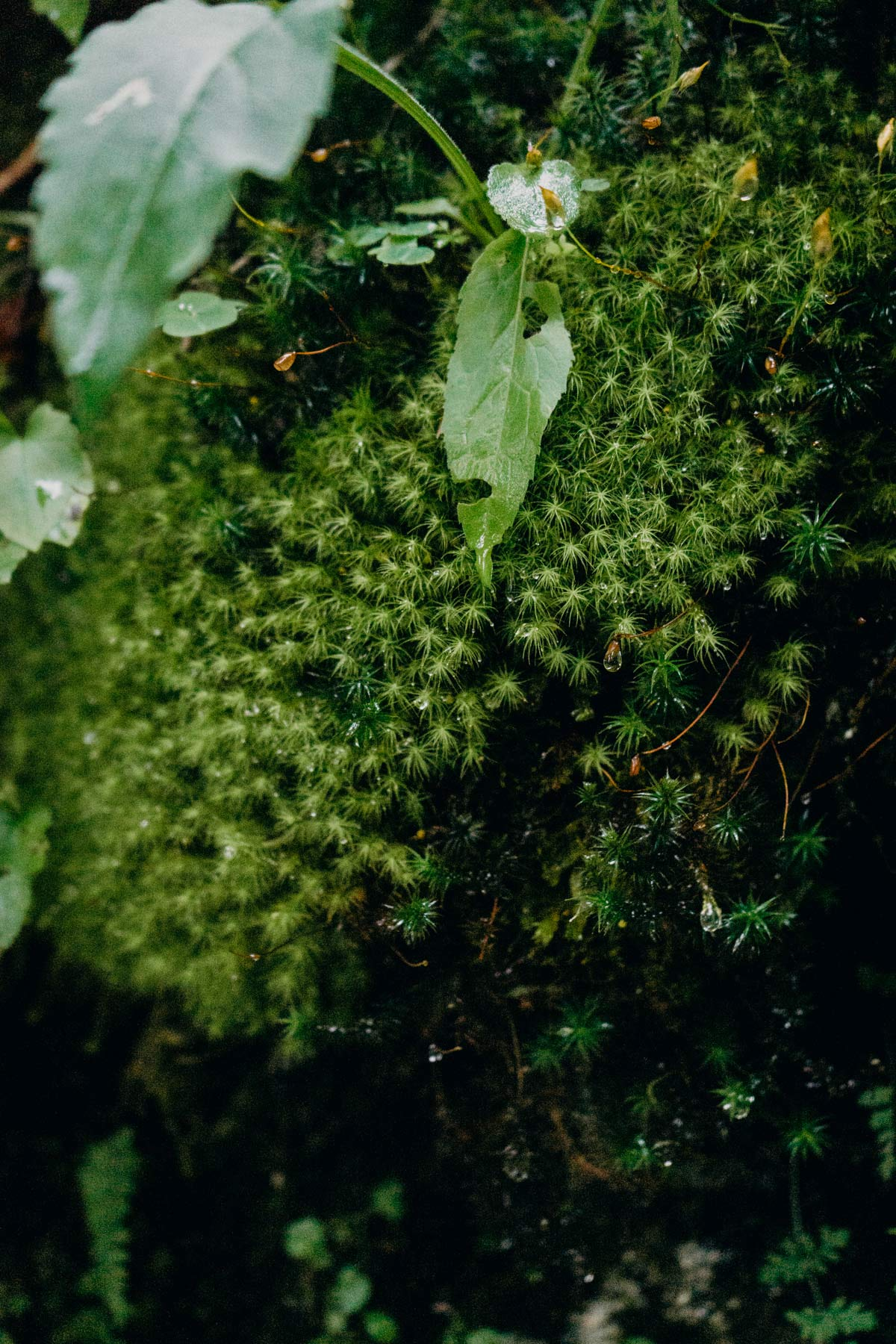 Waldspaziergang Almwelt Lofer
