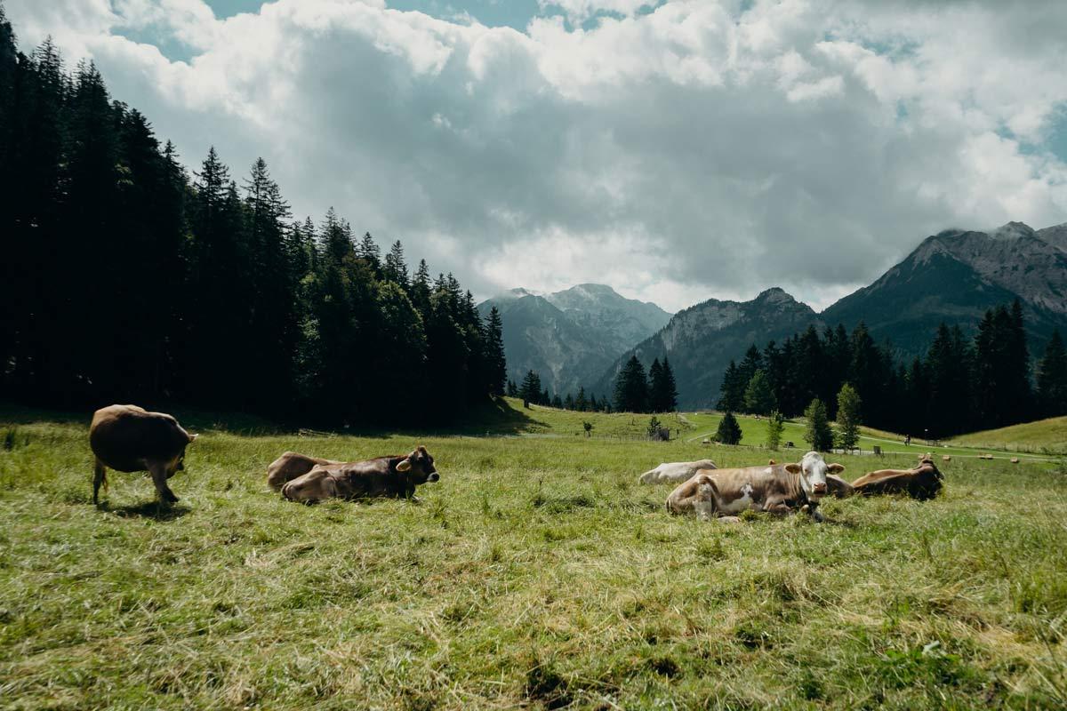 Weide Schlossanger Alp