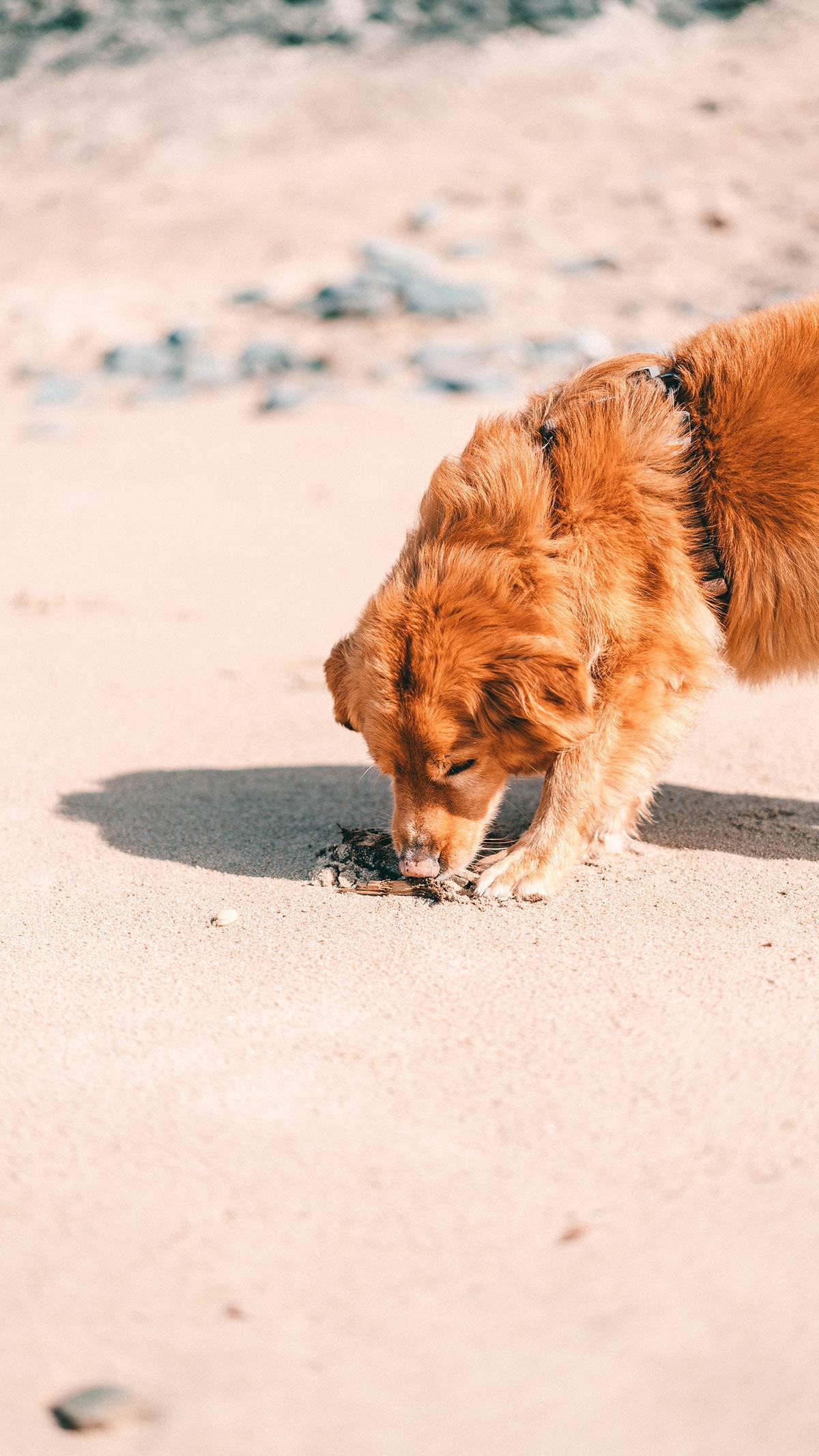 Artgerechte Hundehaltung Merkmale