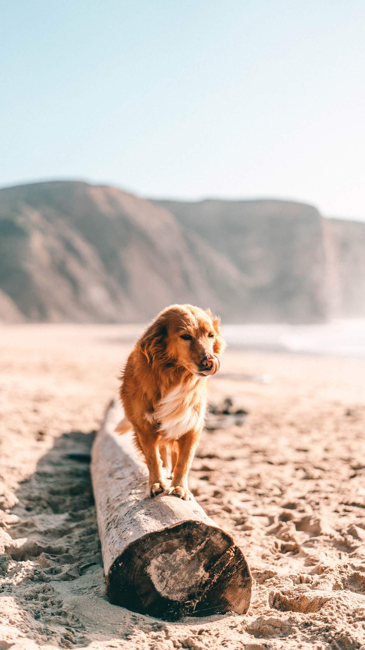 So geht Artgerechte Hundehaltung