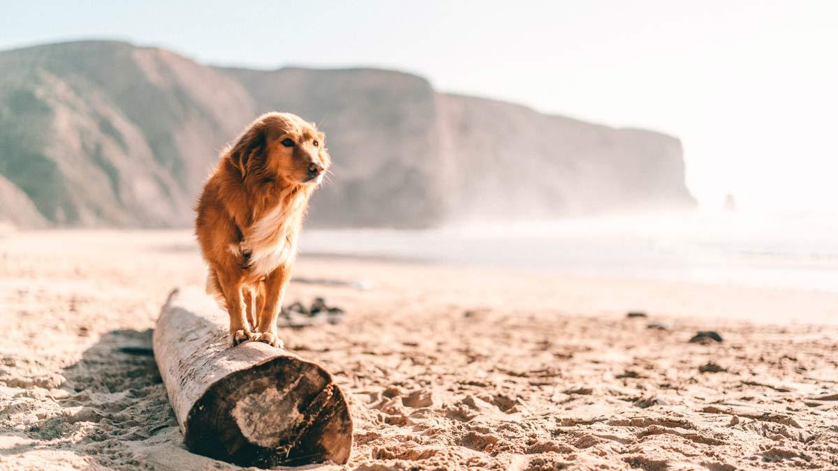 Hund auf Baumstamm Strand