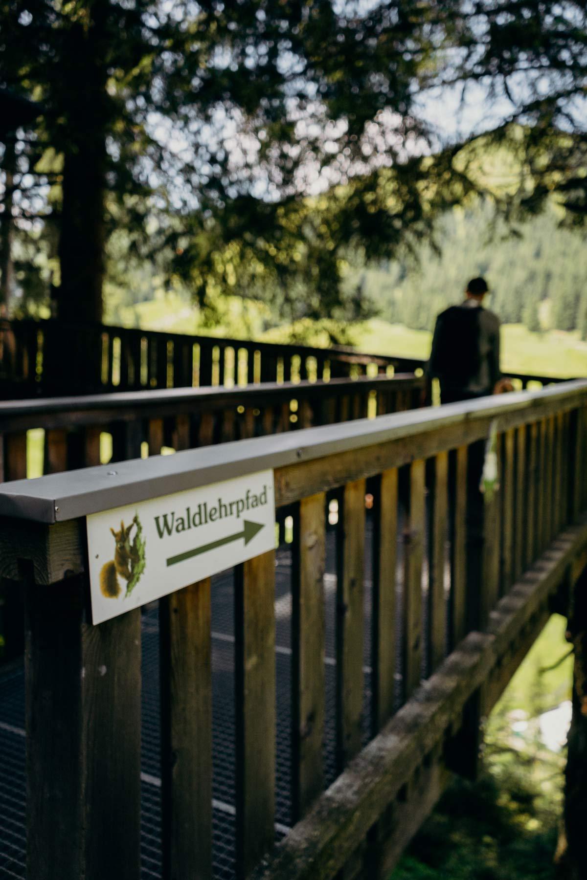 Waldlehrpfad Saalbach