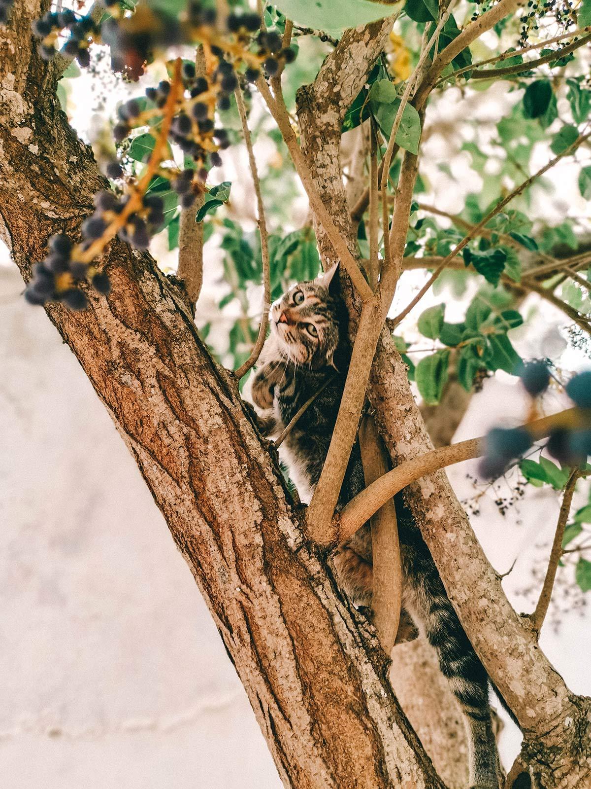 Baum Hauskatze