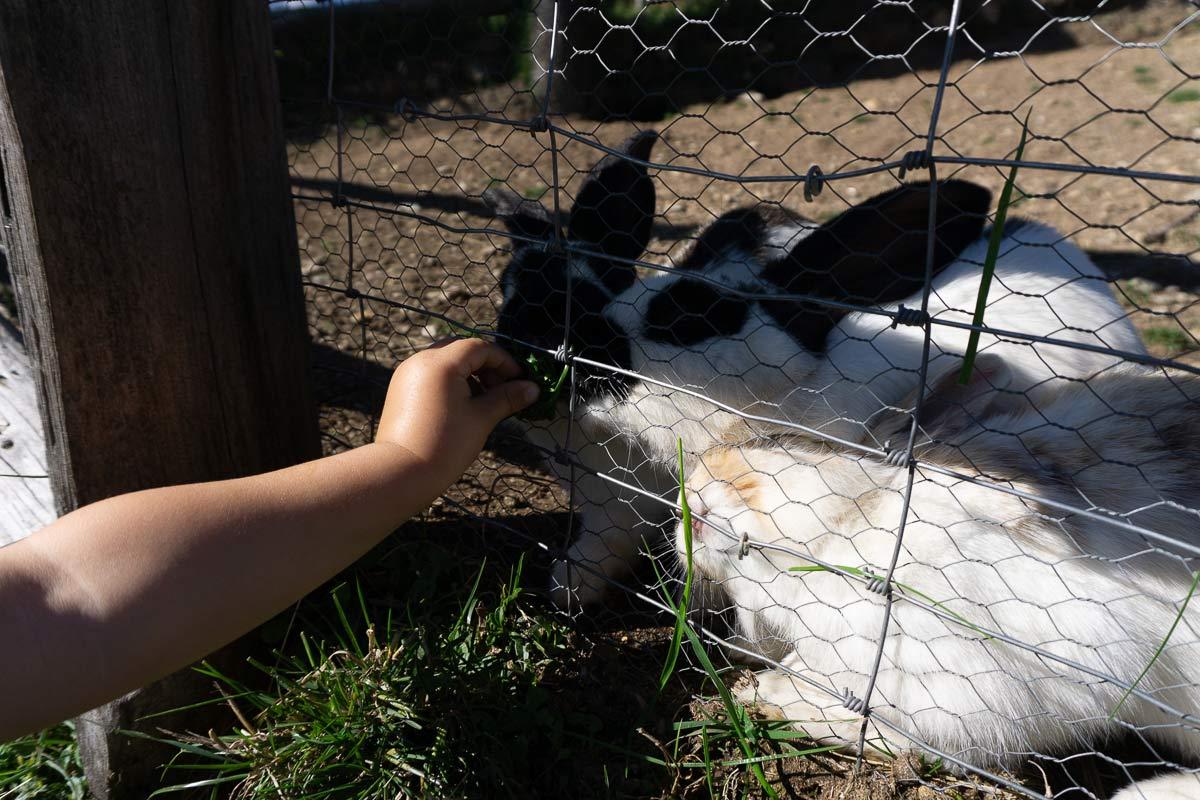 gampl alm sudtirol kaninchen