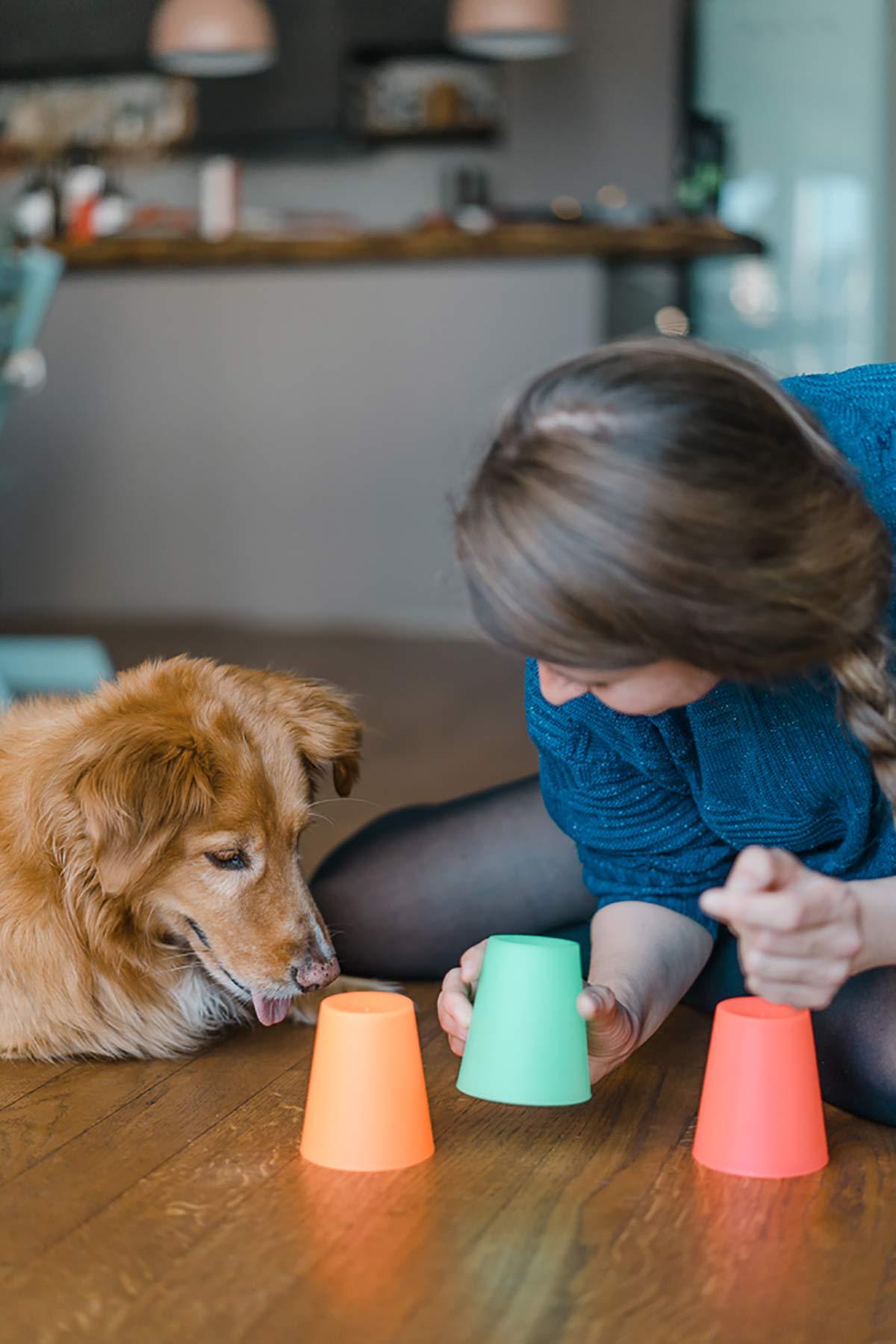 Hundebeschäftigung zu Hause Becherspiel