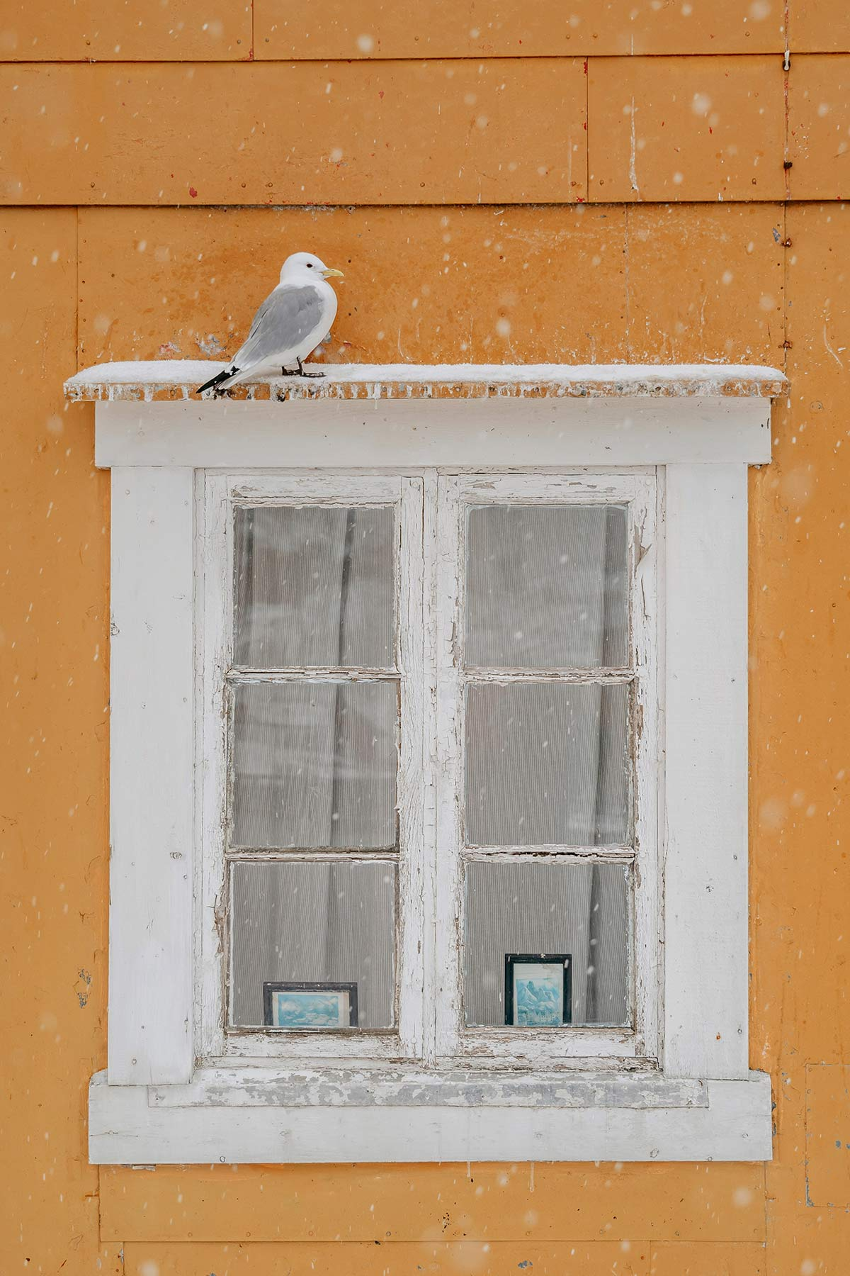 Fenster mit Moewe