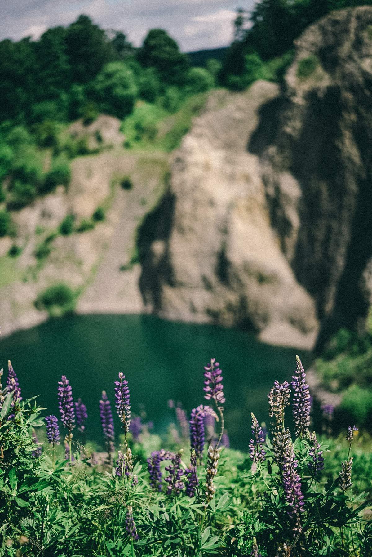 Blumen und See