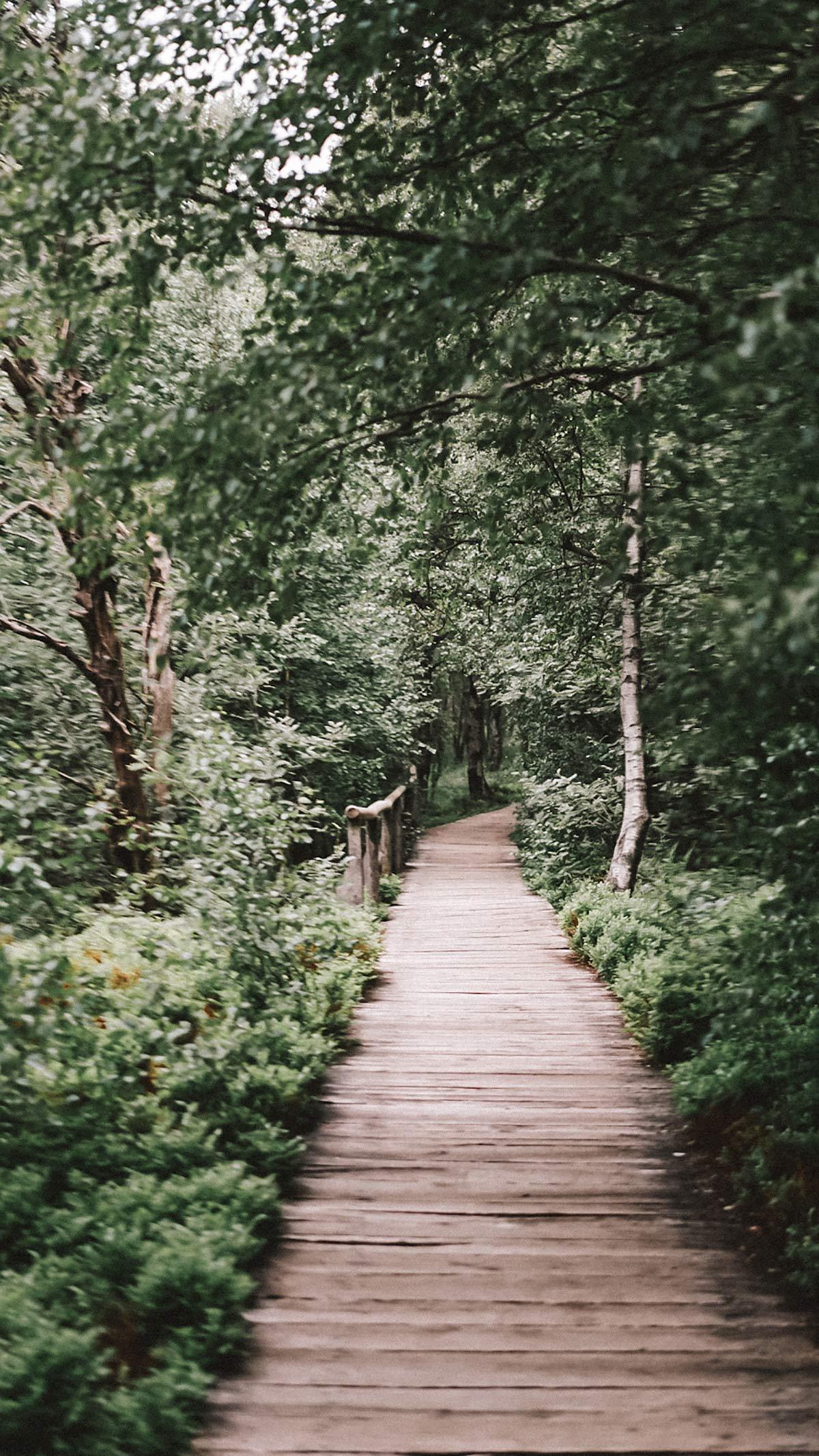 Holzsteg Moor