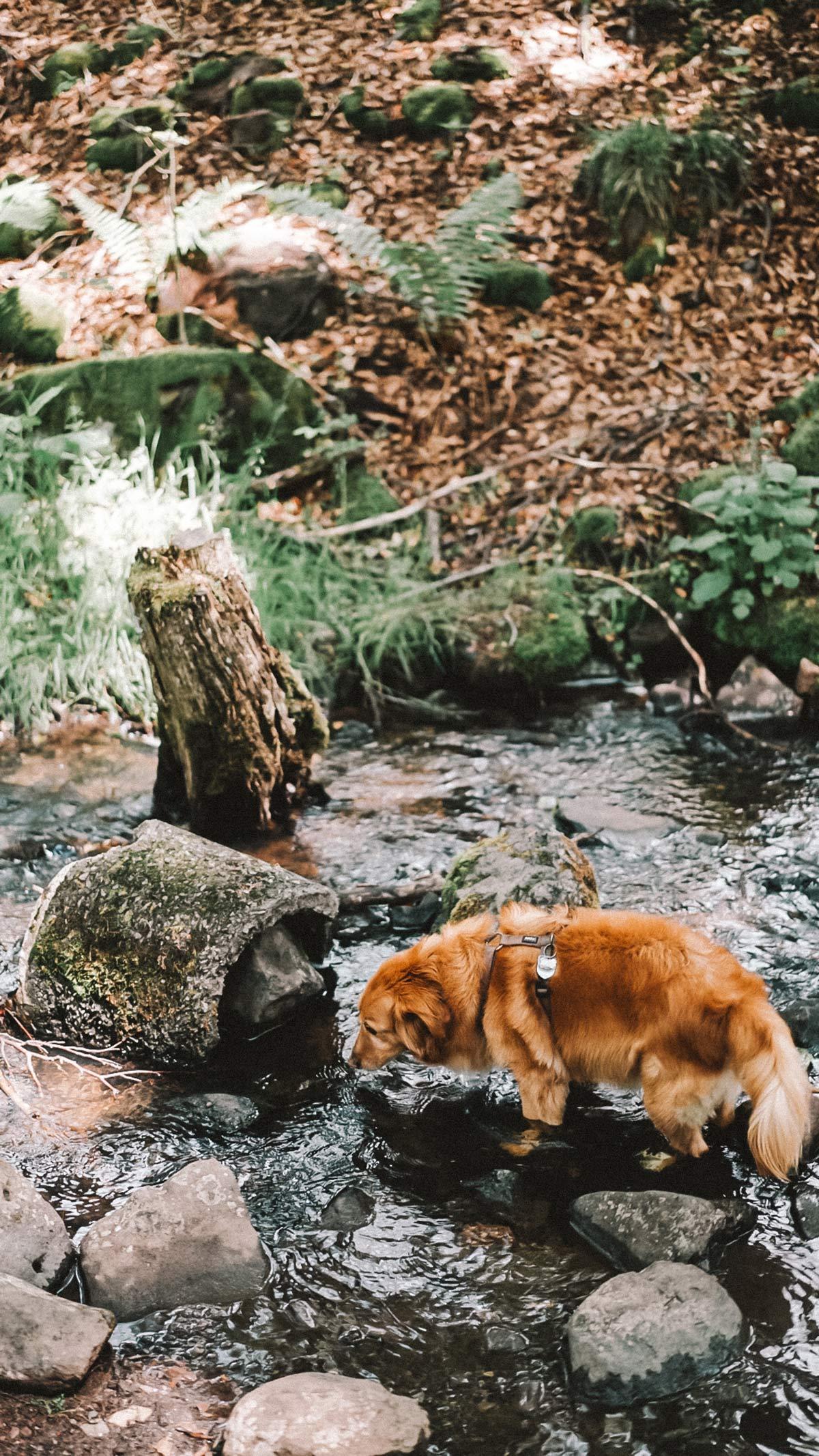 Kaskadenschlucht mit Hund