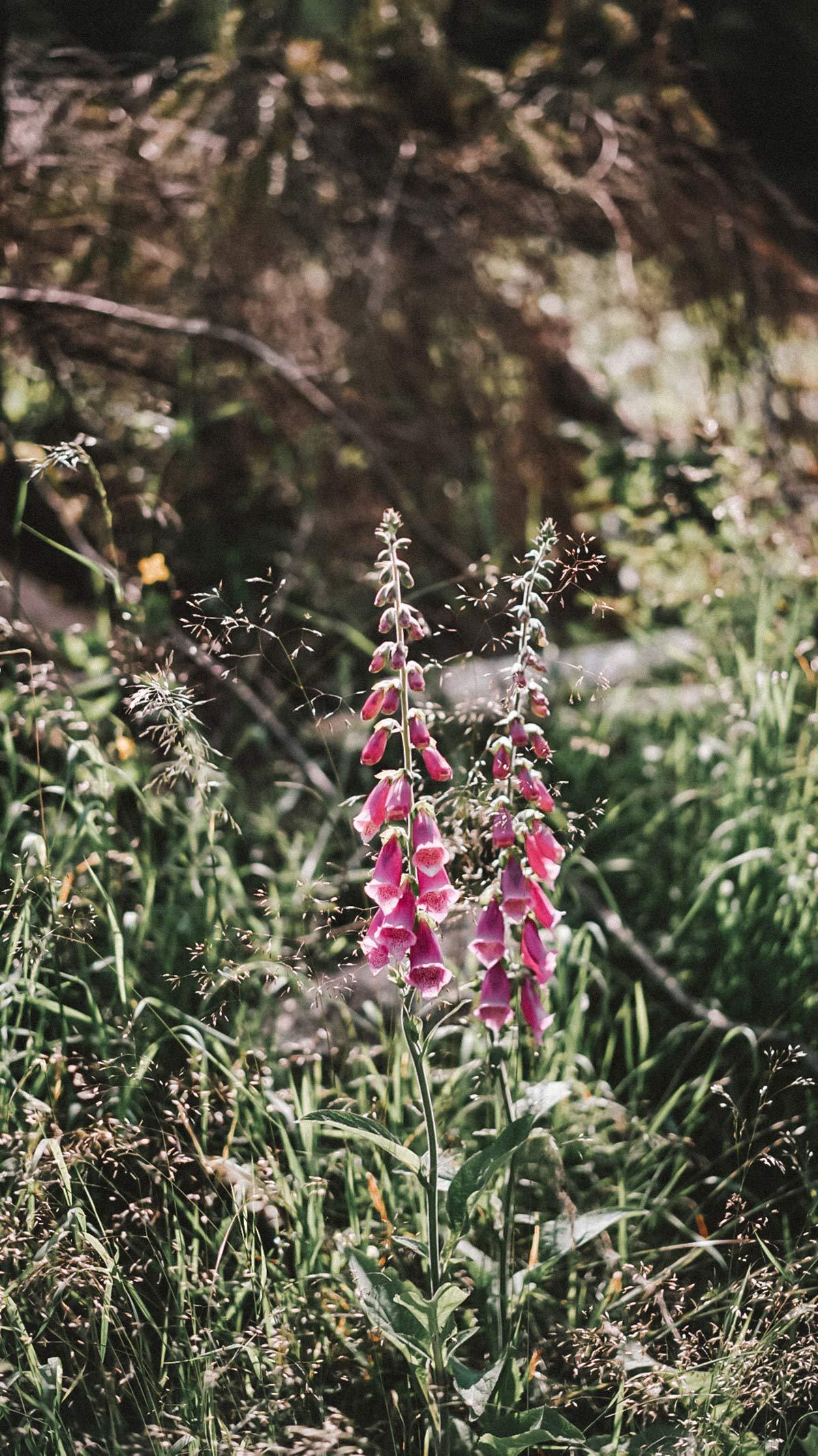 Orchideen Rhoen