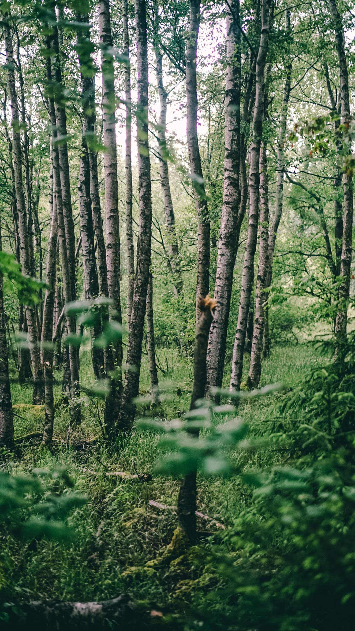 Rhoen Schwarze Moor