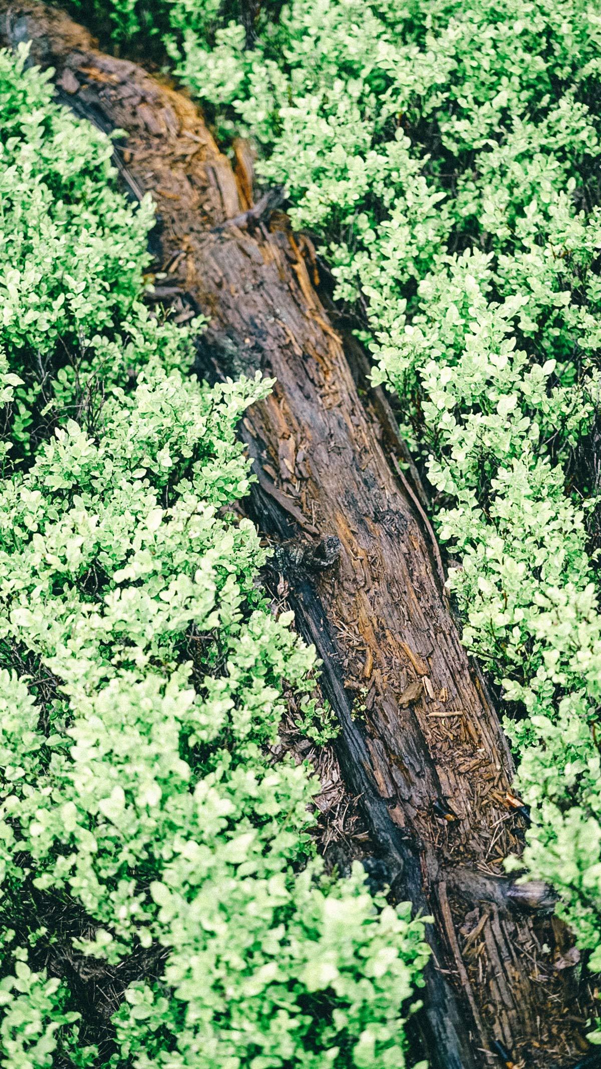 Schwarze Moor Baumstamm