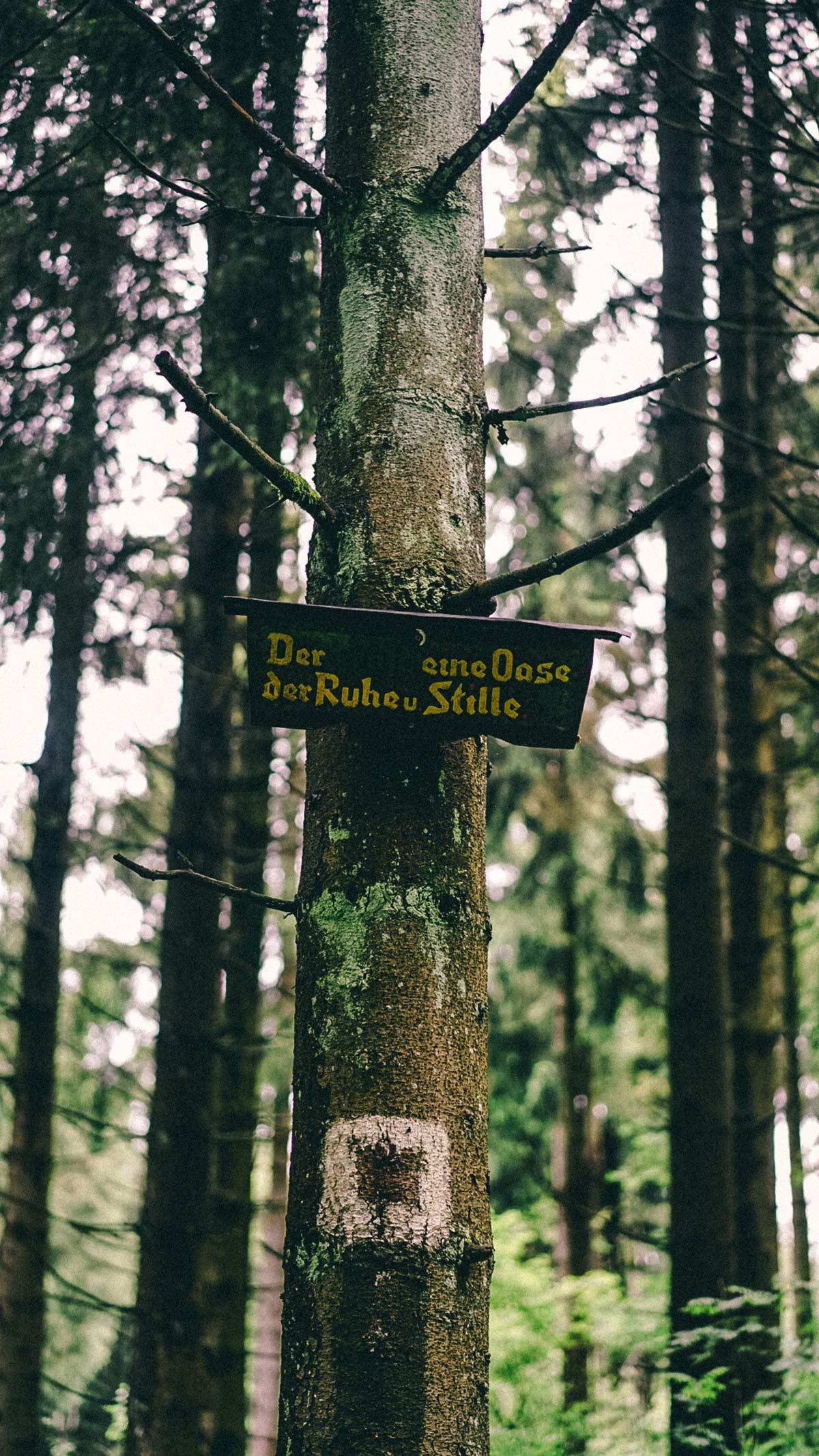 Wald ein ort der Stille