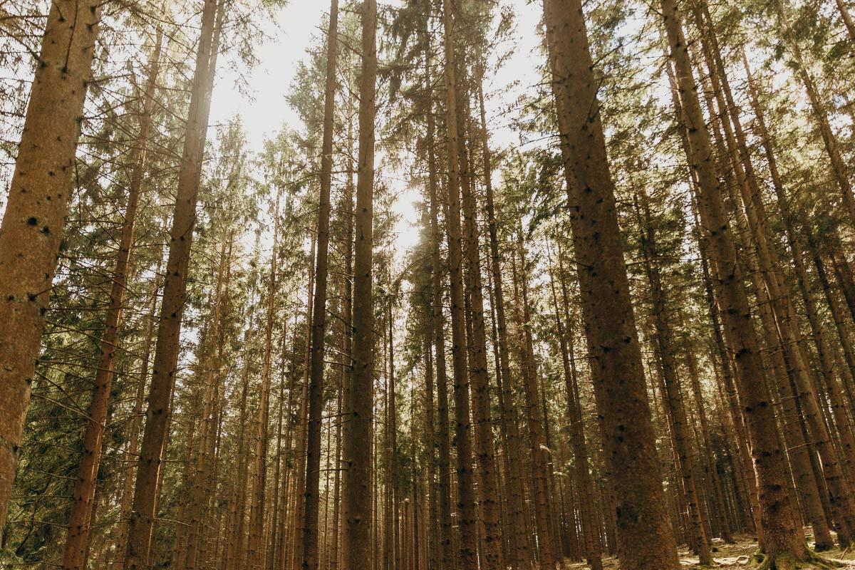 Wald Aussichtsplattform Biggeblick
