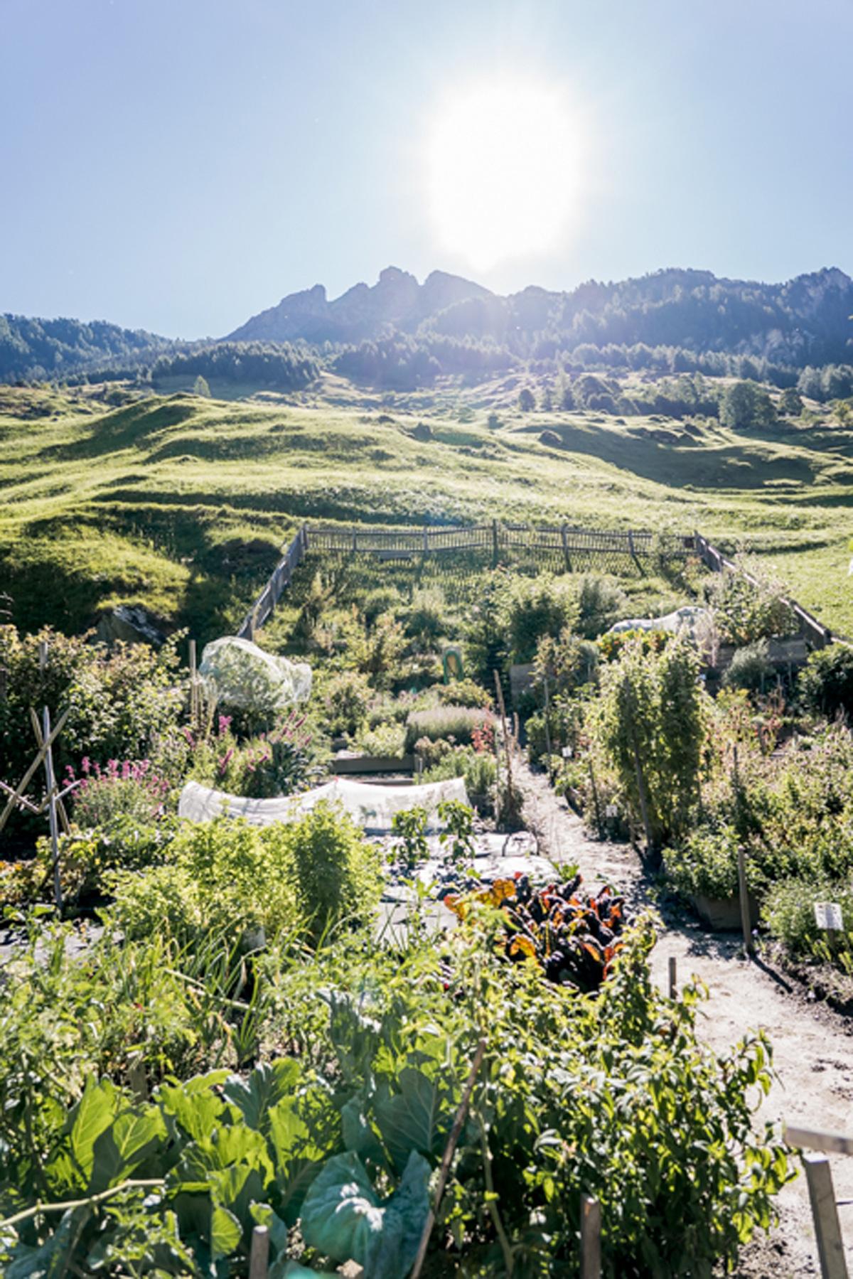 Vals in der Schweiz Blick auf den Kraeutergarten in Vals