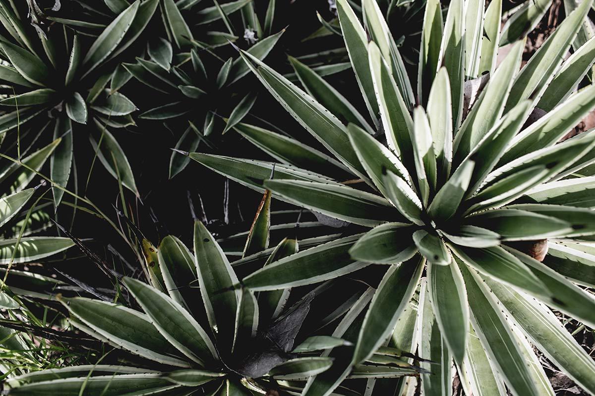 pflanzen nachhaltig