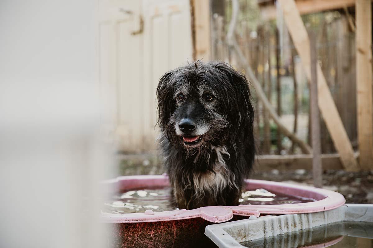Hund Wendland