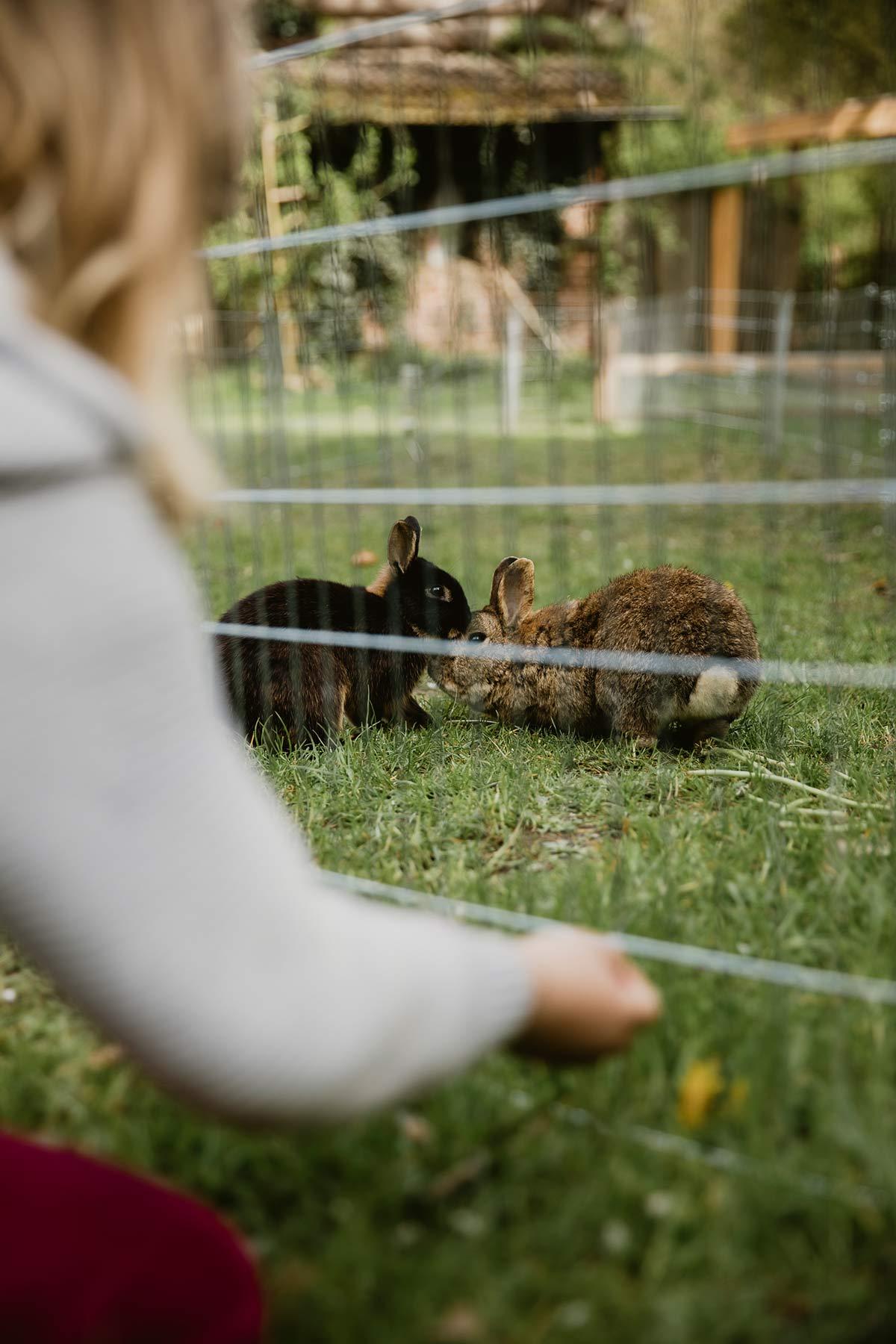 Kaninchen Muetzingenta