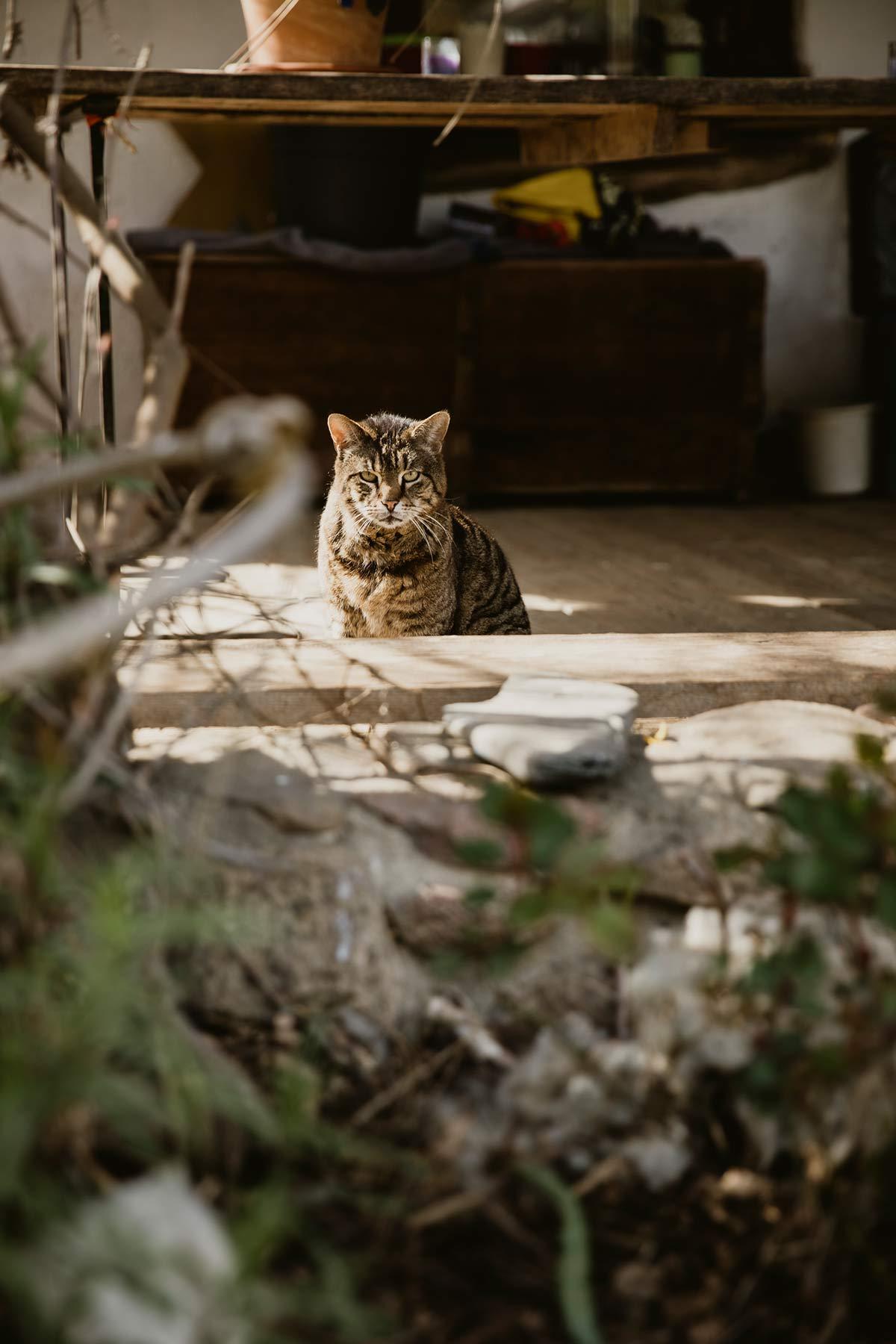 Wendland Katze