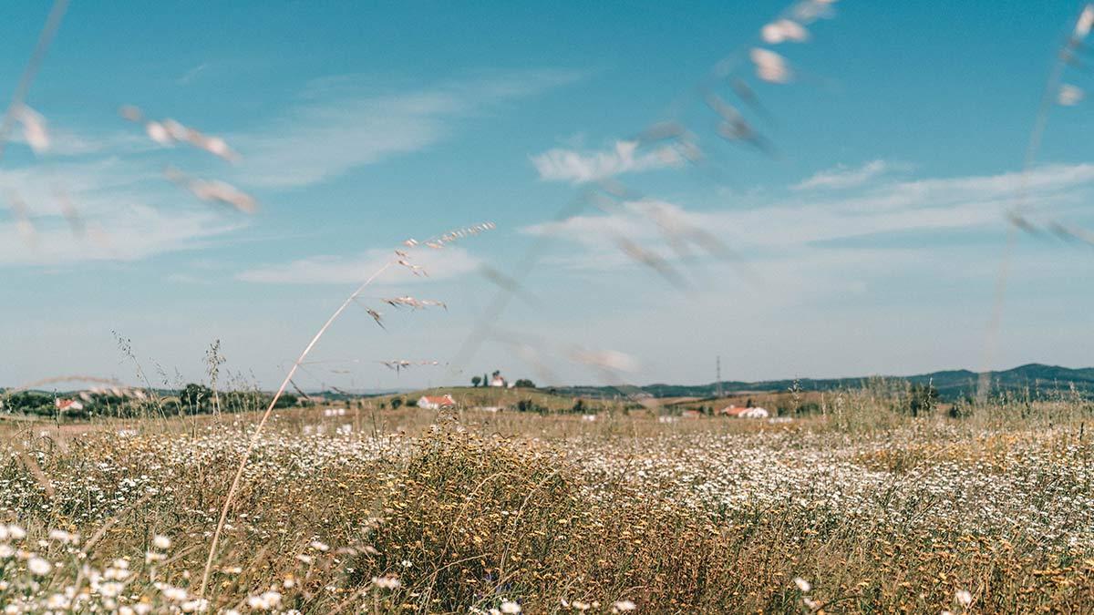 Landschaft Pego das pias